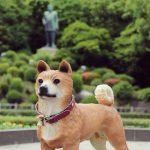 【Instagram】西郷どんの愛犬「つん」