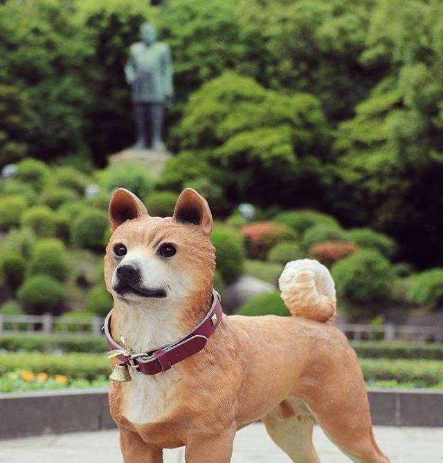 西郷どんの愛犬「つん」。保険医協会主催の写真教室にて、西郷銅像撮影ひろばにいた「つん」を撮影。