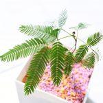 【Instagram】スタッフによる挿し木