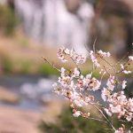 東洋のナイアガラ、曾木の滝