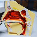 耳鼻科医の武器、間接喉頭鏡