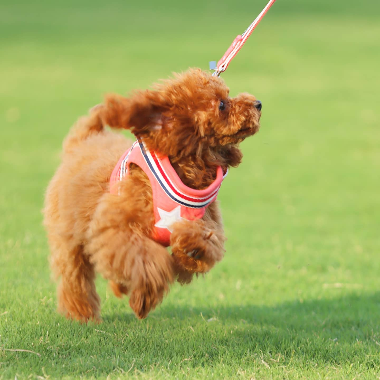 愛犬フィンくんと初めてのお散歩